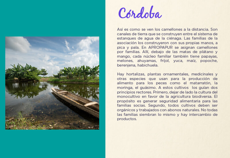 Departamento de Córdoba