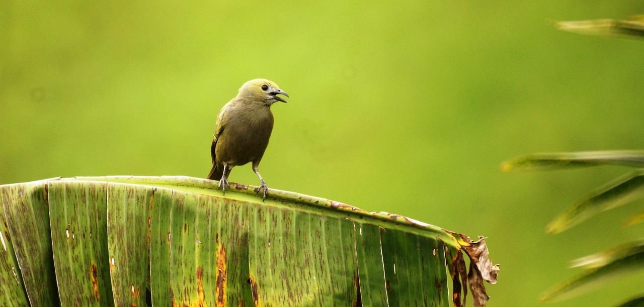 avistadores de aves en Tolima (Colombia)