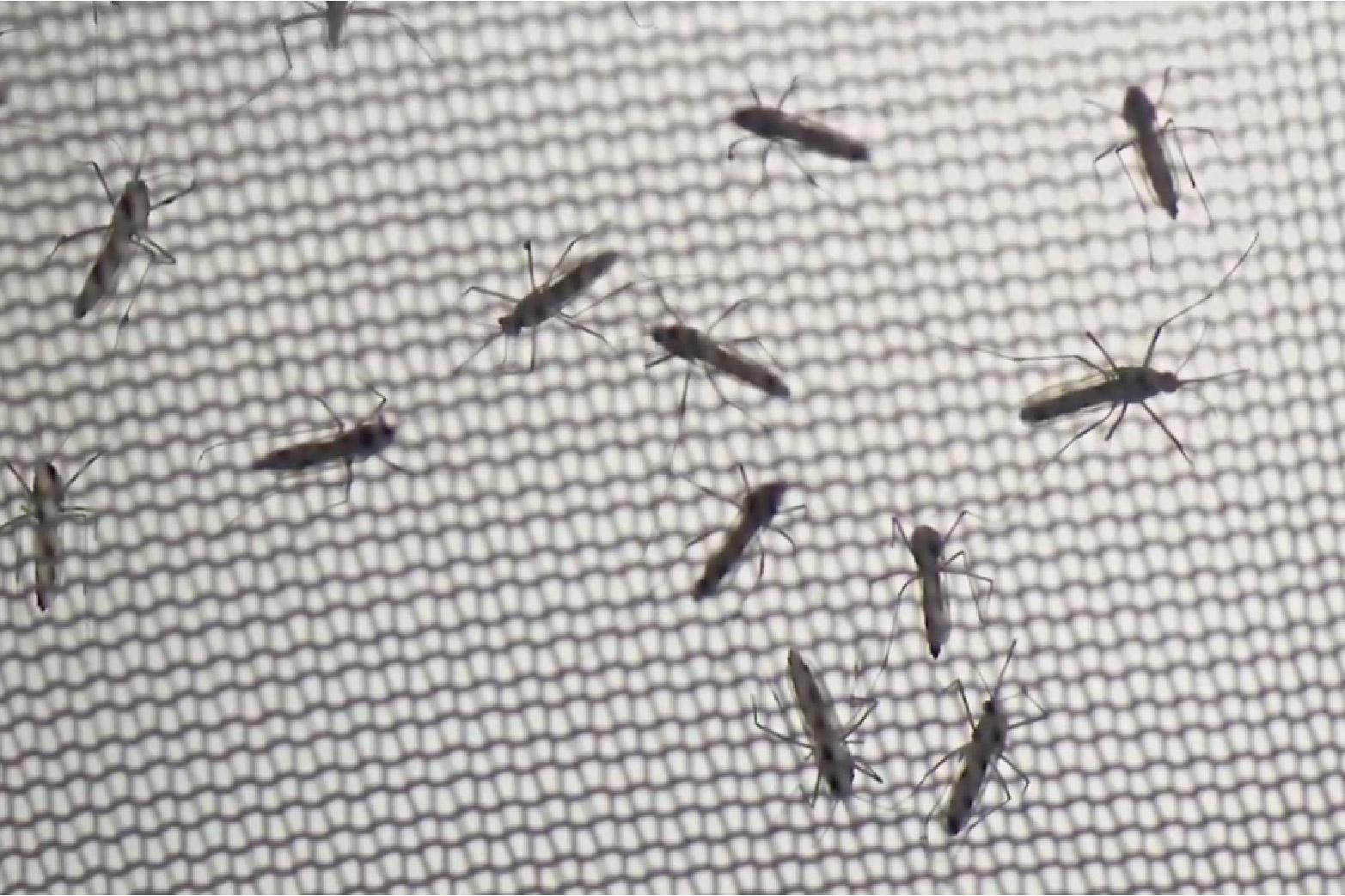 CX1Día - Cap 06 Mosquitos