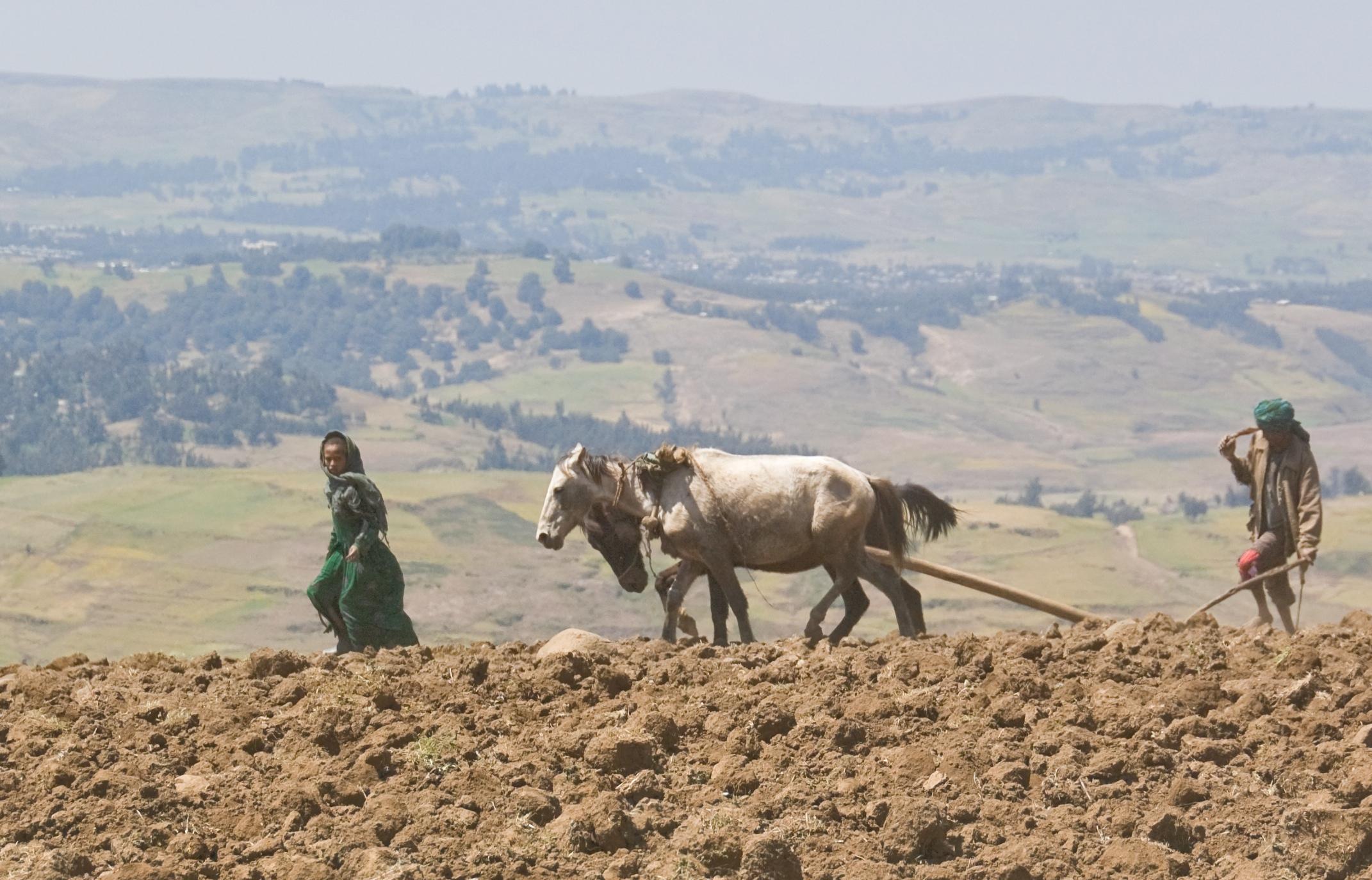 cultivo en el norte de Etiopía