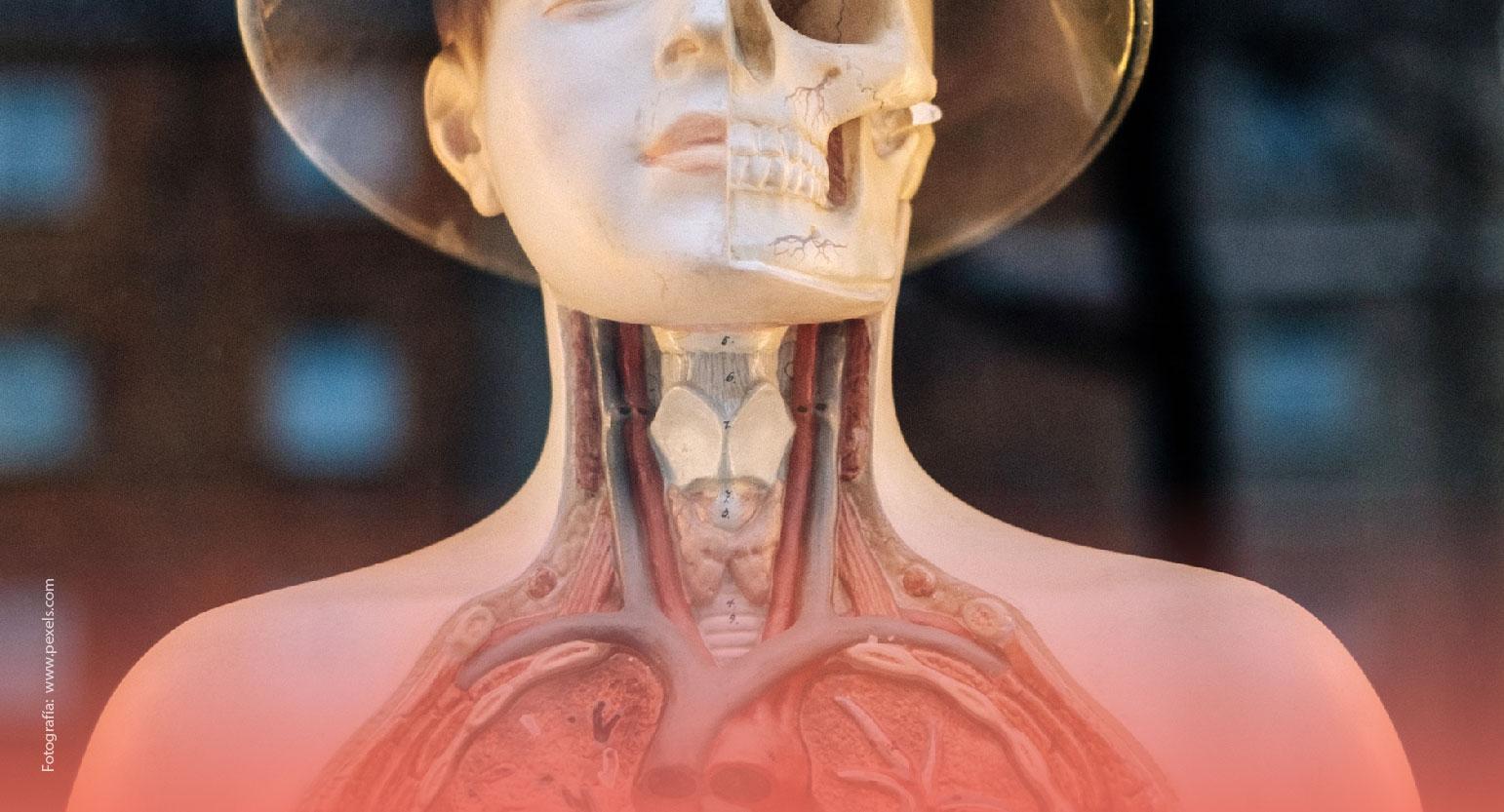 Órganos prescindibles del cuerpo humano