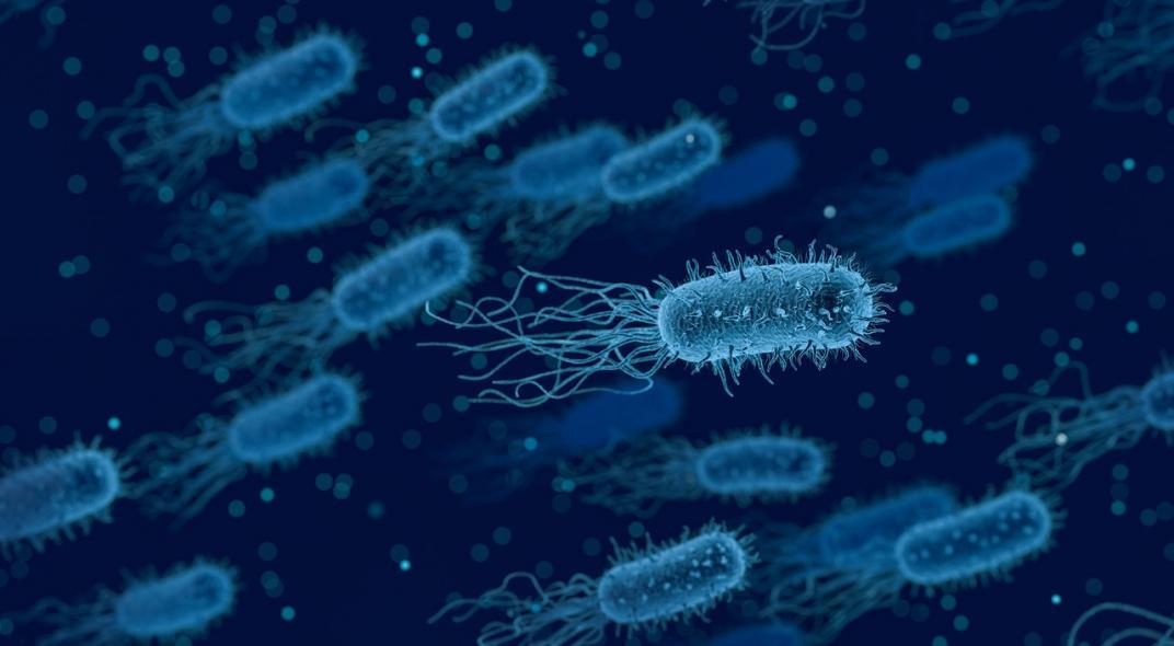 superbacterias, bacteria Lysinibacilus sphaericus