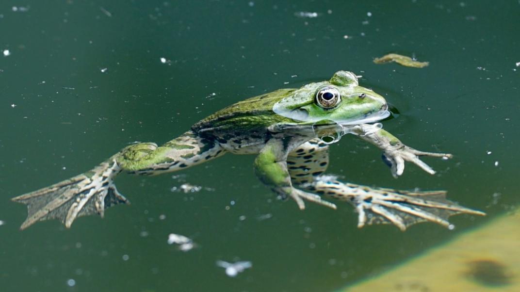 La amenza del cambio climático contra la biodiversidad