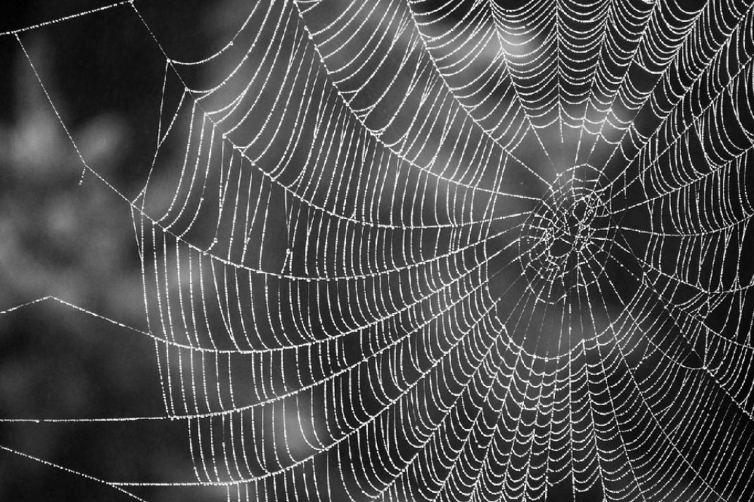 telaraña araña casa