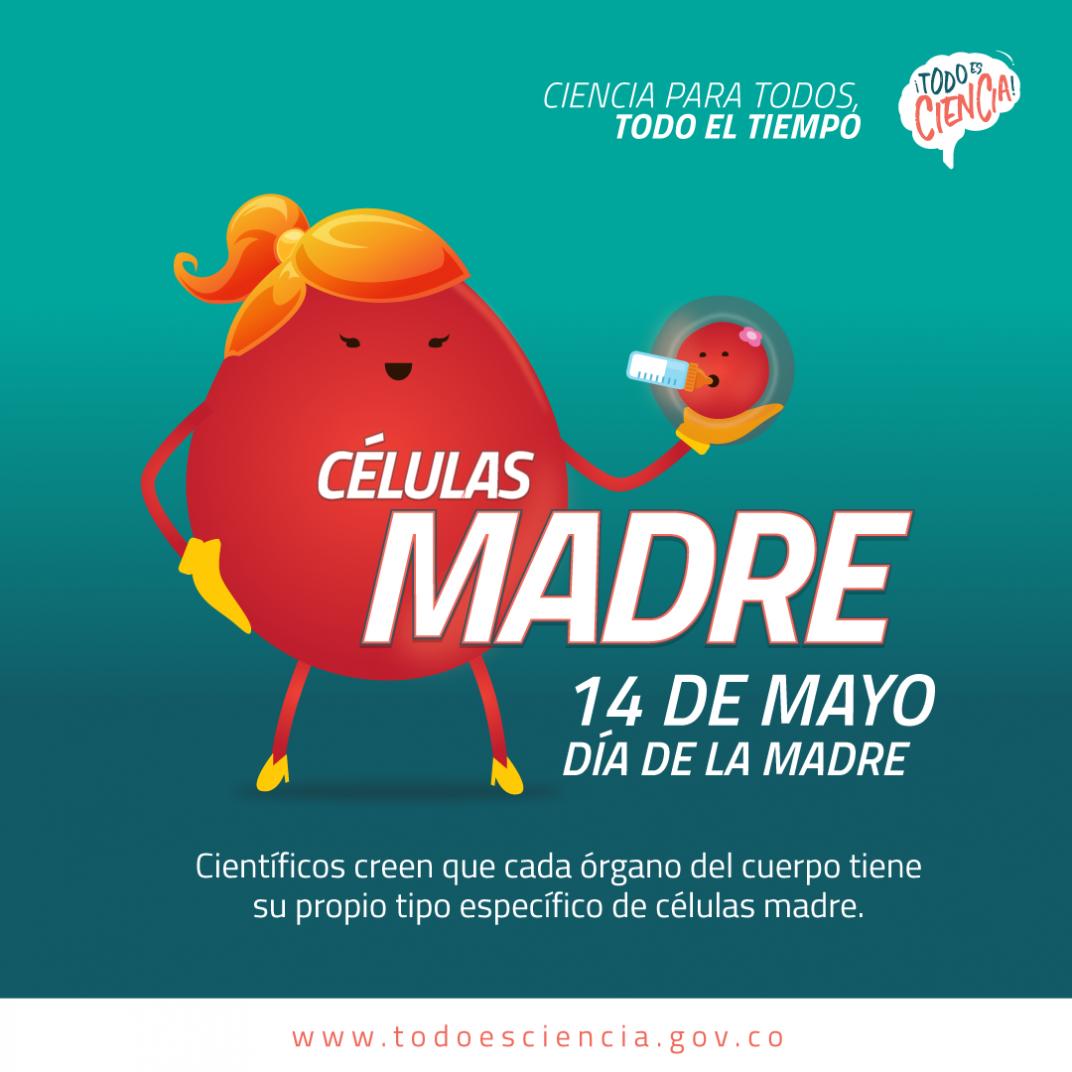 Células Madre - Día de la Madre