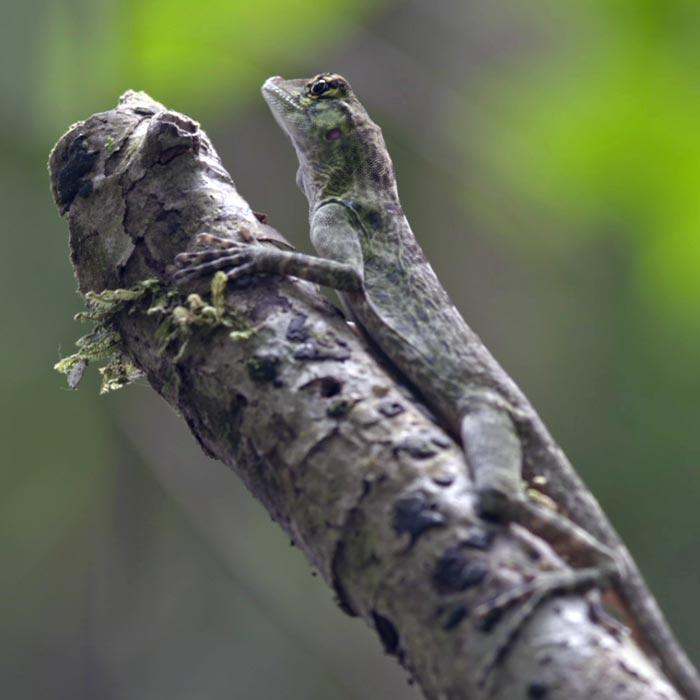 tacarcuna choco colombia biodiversidad darien